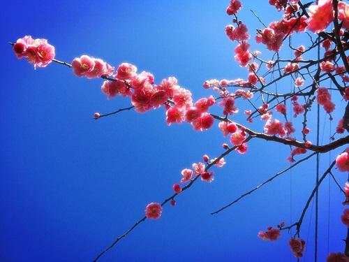 春の華やかなご飯。