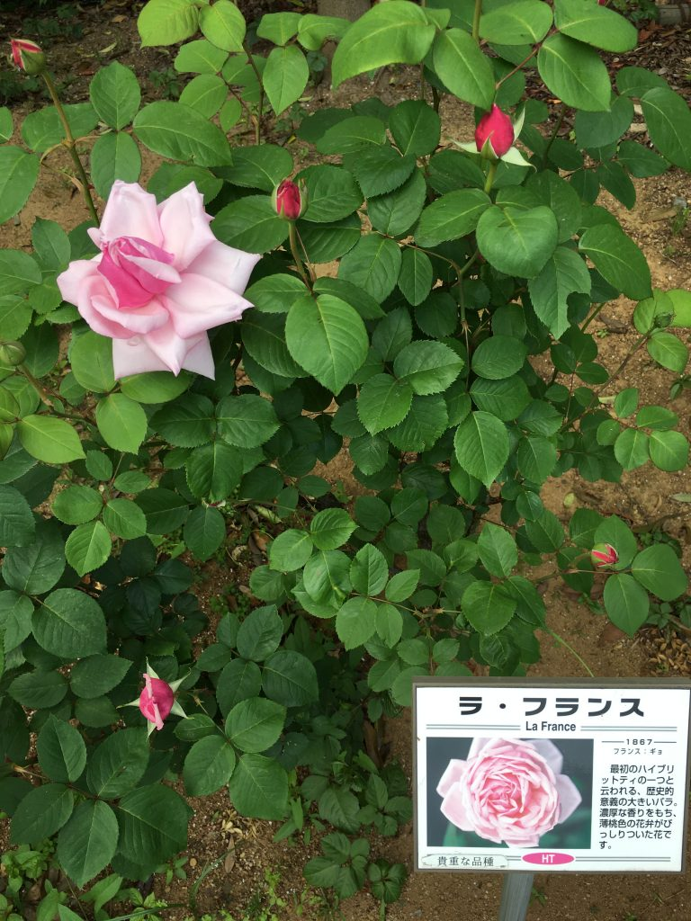 写真 2017-05-11 13 51 32
